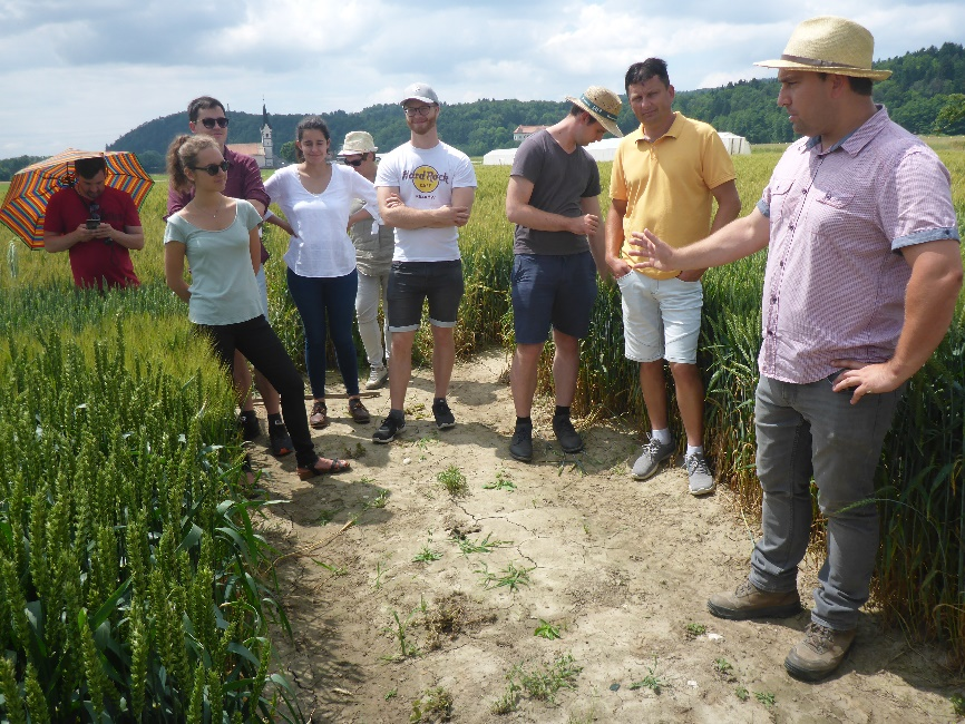 Ales Kolmanic from KIS demonstrates the WP2 multiplication plots to BOKU students and professors at Jablje experimental station