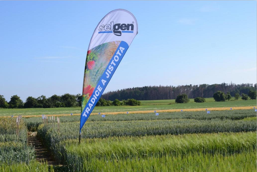 ECOBREED's wheat trials in station Stupice, Czech Republic